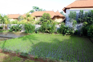 One of the many rice paddies surrounding on the grounds